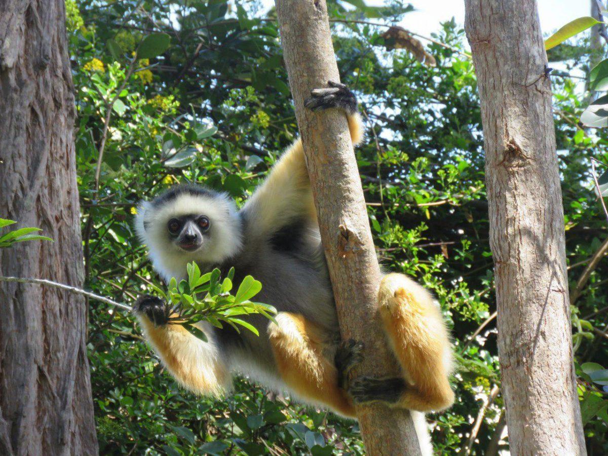 تور ماداگاسکار، بهترین زمان سفر به ماداگاسکار