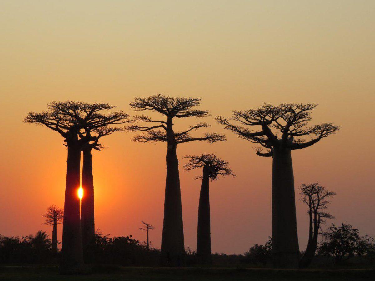 تور ماداگاسکار، ویزای ماداگاسکار، بهترین زمان سفر به ماداگاسکار