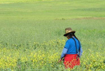 سفرنامه پرو، شهر کوزکو، خطوط نازکا