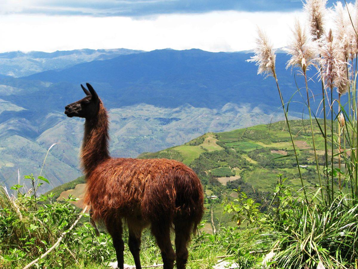 تور پرو، تور برزیل، سفرنامه ناصر خسرو، سفرنامه پرو
